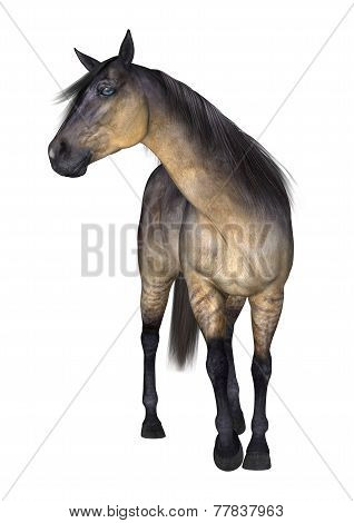 3D digital render Horse