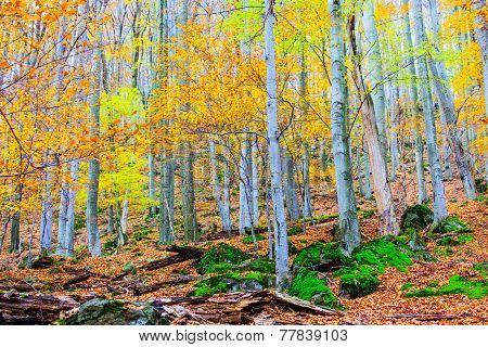 Autumn Forest.
