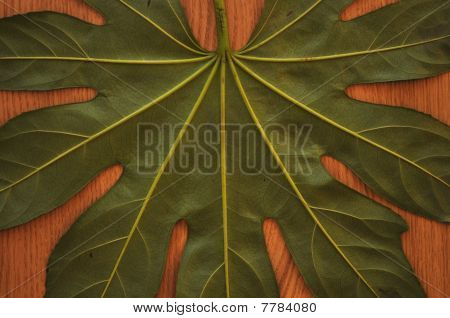 Leaf and wooden background