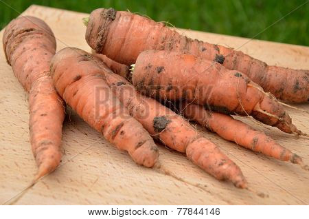 Freshly picked carrot