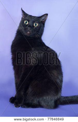Black Cat Sitting On Lilac