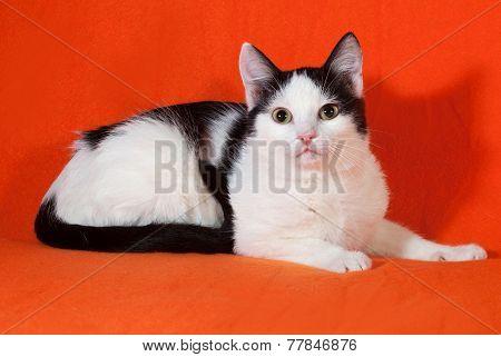 White With Black Spots Kitten Lying On Orange