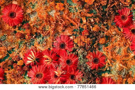 Artistic Colorful Art From Flowers