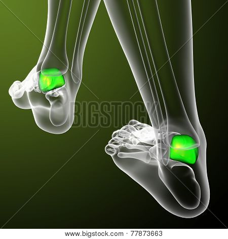 3D Render Medical Illustration Of The Talus Bone
