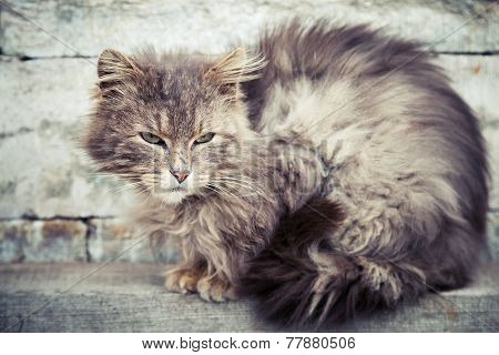 Gray Homeless Longhair Cat Sitting On Bench
