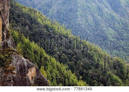 Forest Around Tiger's Nest