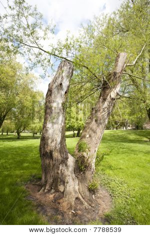 V Sign Tree