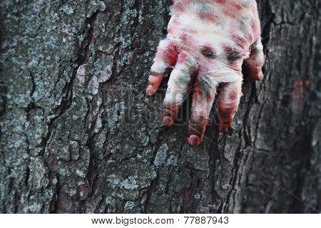 Hand of mummy outdoors