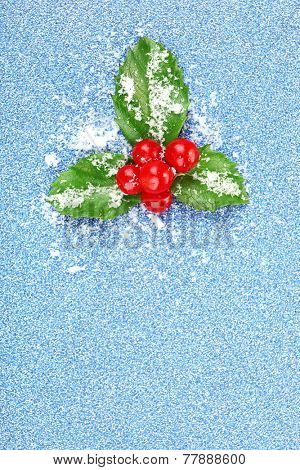 European Holly (Ilex aquifolium) with berries on blue background