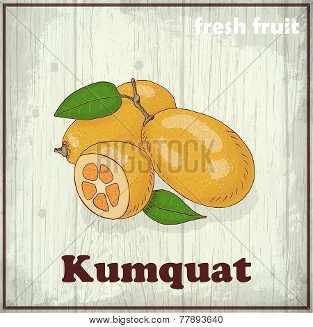 Fresh Fruit Sketch Background. Hand Drawing Illustration Of Kumquat