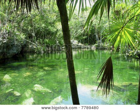 Cenote Riviera Maya Jungle Mayan Quintana Roo