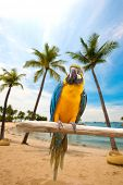 picture of sun perch  - Beautiful macaws perched on a wooden post enjoying the warmth of the evening sun by the beach - JPG