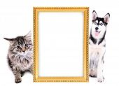 picture of puppy kitten  - Little kitten and  husky puppy with frame isolated on white - JPG