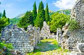 foto of greenery  - The lush greenery among the ruins of the old town of Stari Bar Montenegro - JPG