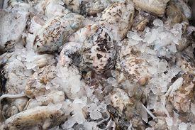 pic of kraken  - Fresh cuttlefish for sale on a Greek island Kalymnos - JPG