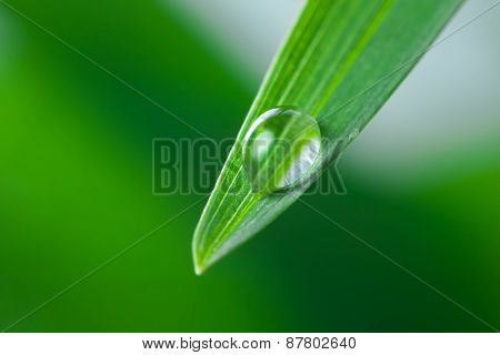Water Drop on the Green Leaf of Grass Close-Up