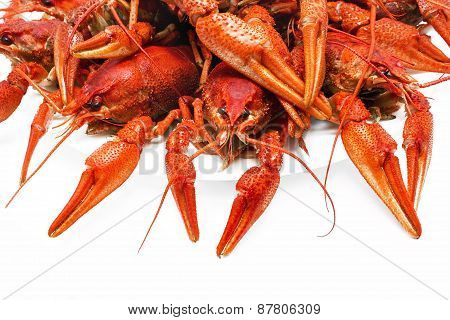 Red  Crawfish On A White Background