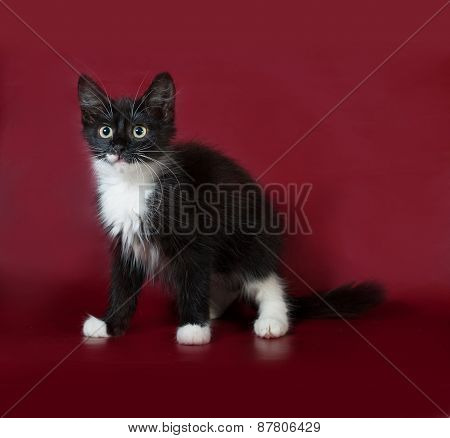 Black And White Fluffy Kitten Standing On Burgundy