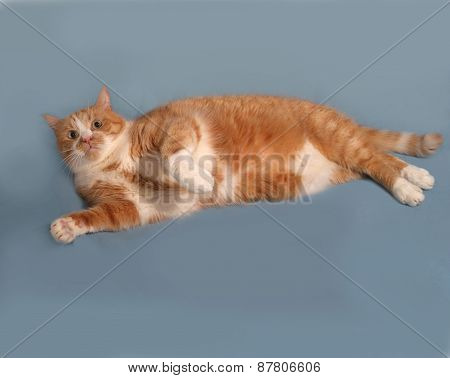 Thick Red And White Cat Lying On Gray