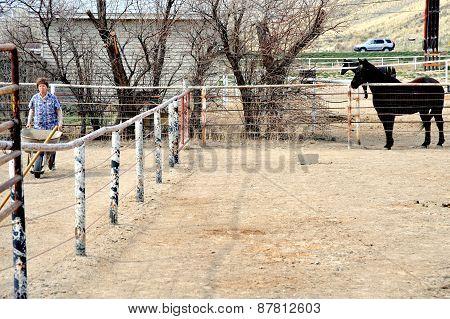 Horse poop.