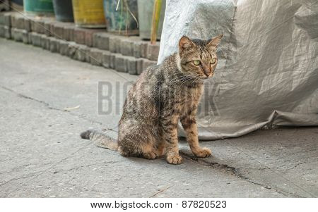 Homeless Cat On Street