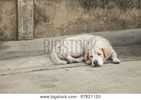 Homeless Dog Tired
