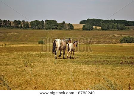 Horses walking on a meadow