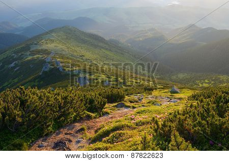 Summer landscape. The path in the mountains. Alpine coniferous forest with pine