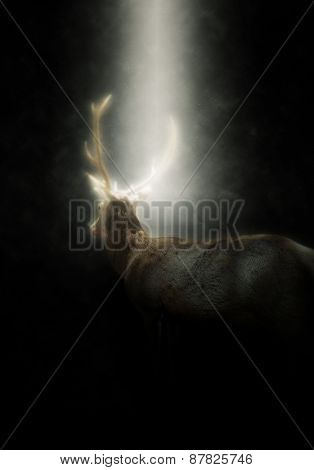 Rear View of Buck Male Deer with Antlers Walking Away from Camera Illuminated in Bright Spotlight with Dark Background