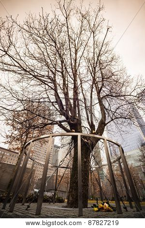 Survivor Tree, Manhattan, New York.