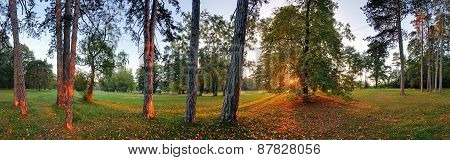Panoramic View Of Forest, 360 Degree