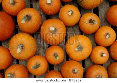 Pumpkins On Pallet