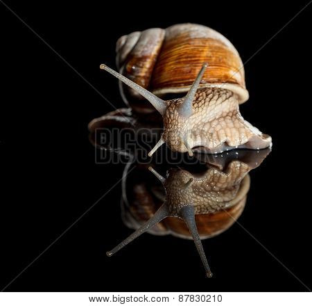 Low Angle View Of Crawling Snail