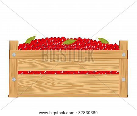 Box with red berry