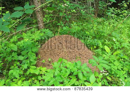 Huge Anthill