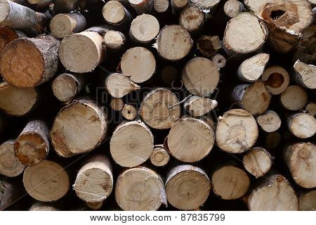 Piled tree trunks closeup