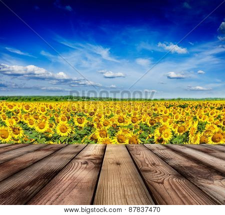 Wooden planks floor with idyllic scenic landscape of sunflower field and blue sky in background