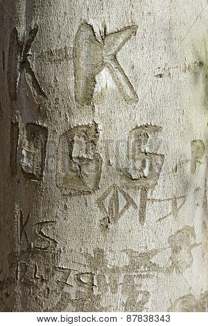 Love Signs, Texture Of The Bark Of A Beech Tree With Carved Letters