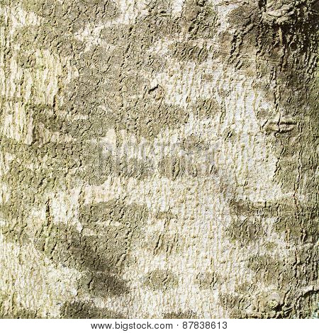 Mottled Bark Of A Tree Trunk, Background Texture