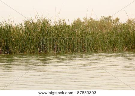 Iraqi Marshlands