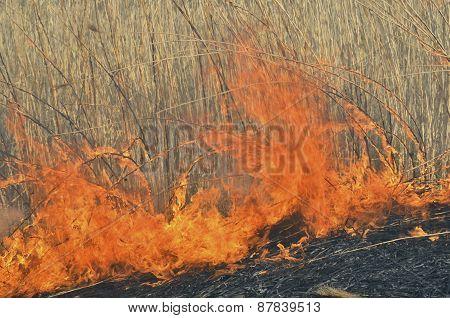 Flame Of Brushfire