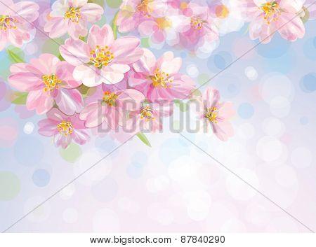 Vector blossoming sakura flowers.