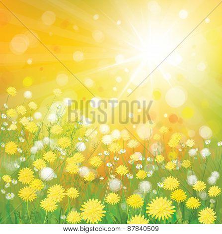 Vector dandelions flowers field.