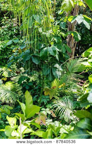 Green Trees In A Rain Forest