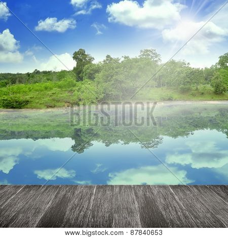 Beauty Forest In Summer Background
