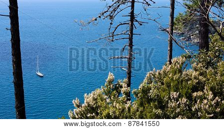 sailing boat to the sea through vegetation in foreground
