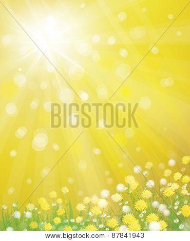 Vector dandelions on sunshine background.