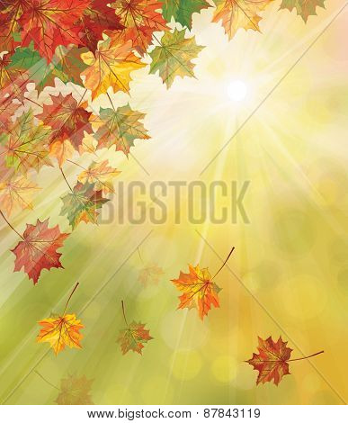 Vector autumn colorful leaves maple tree on sunny background.