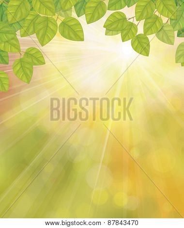 Vector green birch's leaves on sunshine background.