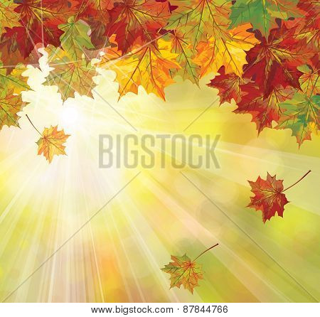 Vector autumn leaves, maple tree.